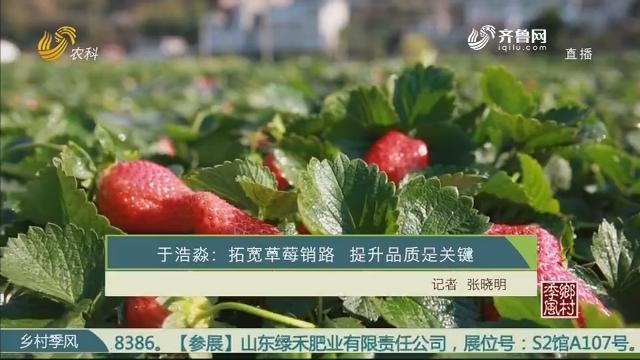 于浩淼:拓宽草莓销路 提升品质是关键
