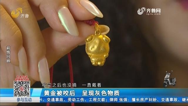 沂源:黄金被咬后 呈现灰色物质