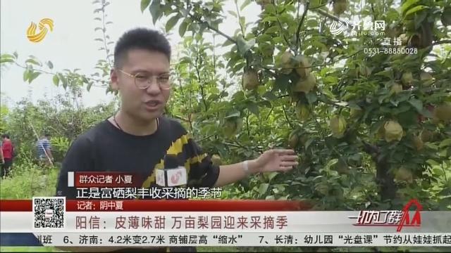 阳信:皮薄味甜 万亩梨园迎来采摘季