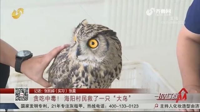 """贪吃中毒! 海阳村民救了一只""""大鸟"""""""