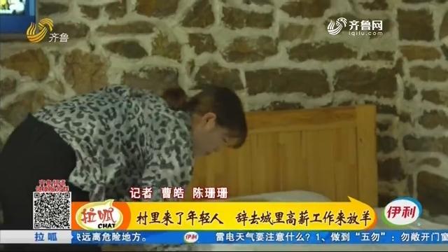 平阴:村里来了年轻人 辞去城里高薪工作来放羊