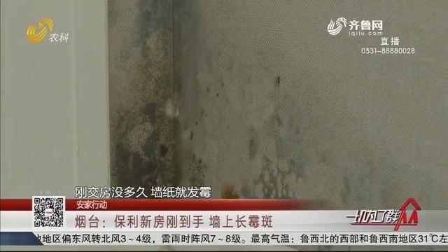 【安家行动】烟台:保利新房刚到手 墙上长霉斑