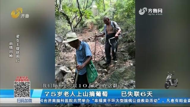 75岁老人上山摘葡萄 已失联6天
