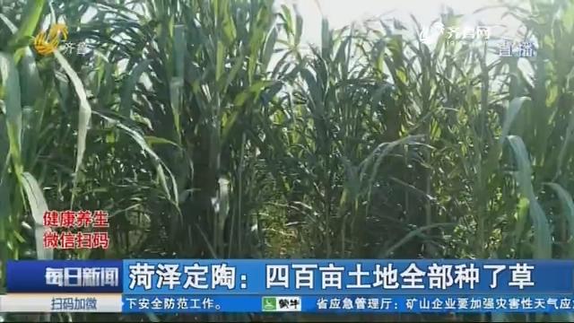 菏泽定陶:四百亩土地全部种了草