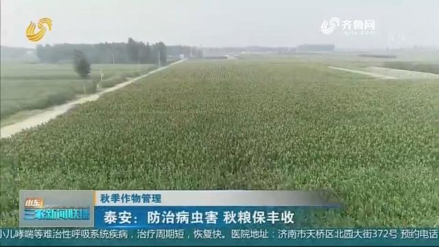【秋季作物管理】泰安:防治病虫害 秋粮保丰收