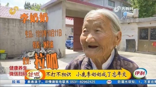 枣庄:不打不相识 小鹿李奶奶成了忘年交