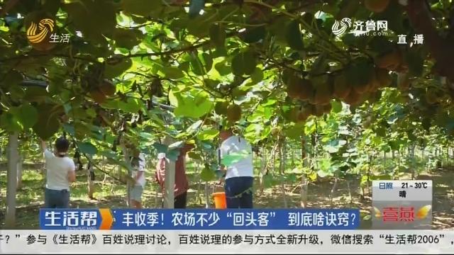 """青州:丰收季!农场不少""""回头客""""到底啥诀窍?"""
