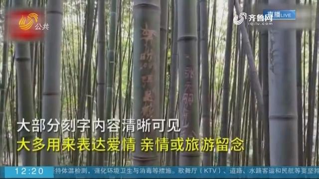 【抖音热点榜】济南一景区竹子被游客恶意刻字留印记