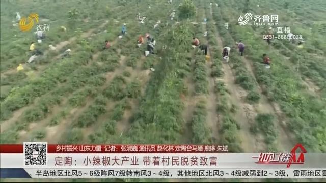 【乡村振兴 山东力量】定陶:小辣椒大产业 带着村民脱贫致富