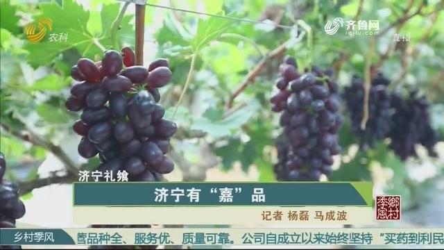 """【济宁礼飨】济宁有""""嘉""""品"""