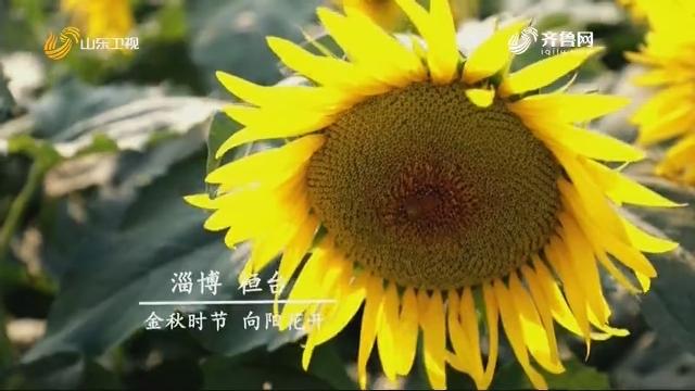 金秋时节 向阳花开