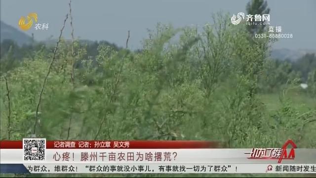 【记者调查】心疼!滕州千亩农田为啥撂荒?