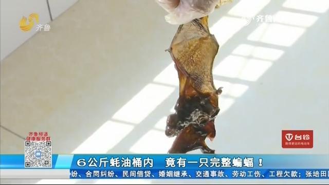 6公斤蚝油桶内 竟有一只完整蝙蝠!