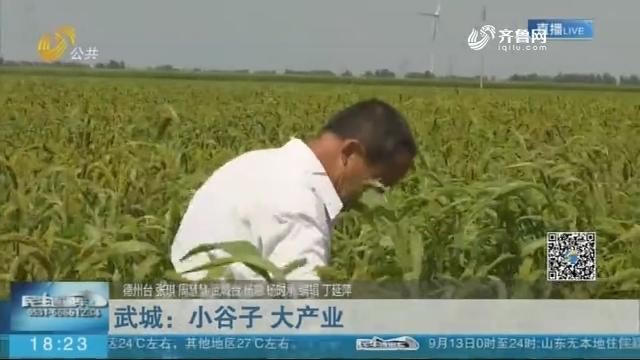武城:小谷子 大产业