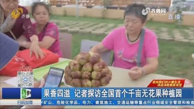 果香四溢 记者探访全国首个千亩无花果种植园