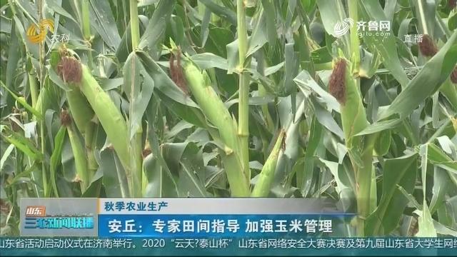 【秋季农业生产】安丘:专家田间指导 加强玉米管理