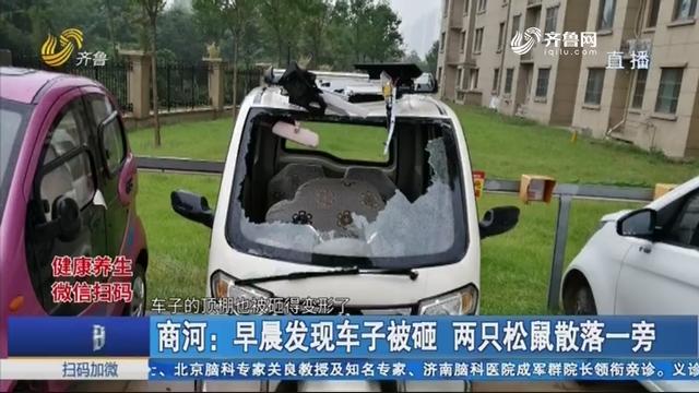 商河:早晨发现车子被砸 两只松鼠散落一旁