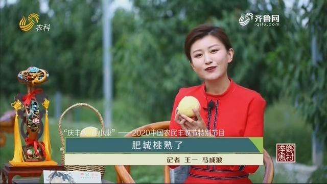 """【""""庆丰收 迎小康""""——2020中国农民丰收节特别节目】肥城桃熟了"""