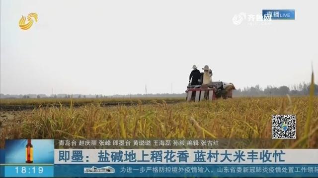 即墨:盐碱地上稻花香 蓝村大米丰收忙