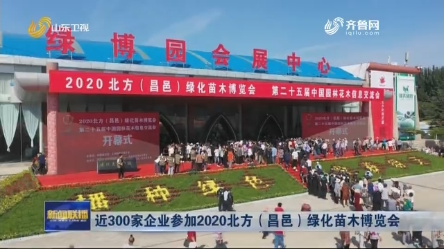 近300家企业参加2020北方(昌邑)绿化苗木博览会