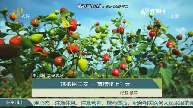 【史丹利·星光农场】辣椒用三安 一亩增收上千元