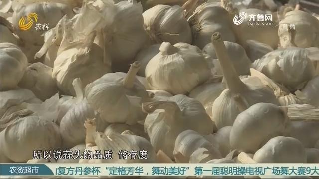 【农大腐植酸 挑战吉尼斯】巨野赛区摆擂台 蒜农热情来挑战