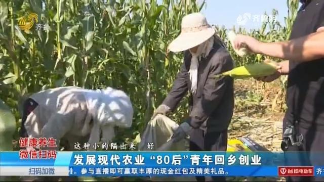 """潍坊:发展现代农业 """"80后""""青年回乡创业"""