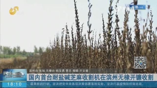 国内首台耐盐碱芝麻收割机在滨州无棣开镰收割