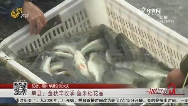 单县:金秋丰收季 鱼米稻花香