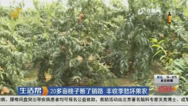 20多亩桃子断了销路 丰收季愁坏果农