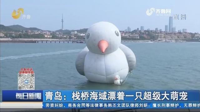 青岛:栈桥海域漂着一只超级大萌宠