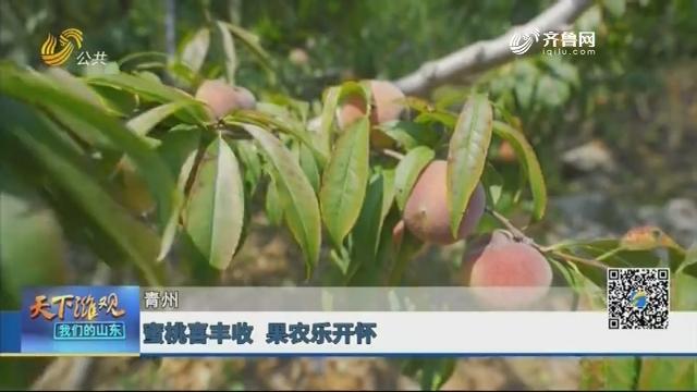 青州:蜜桃喜丰收 果农乐开怀