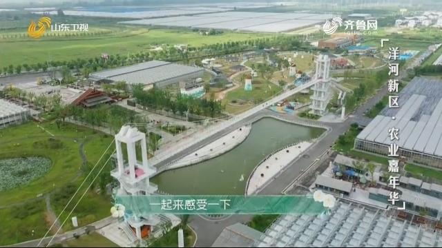 20201004《田园中国》:洋河新区·农业嘉年华