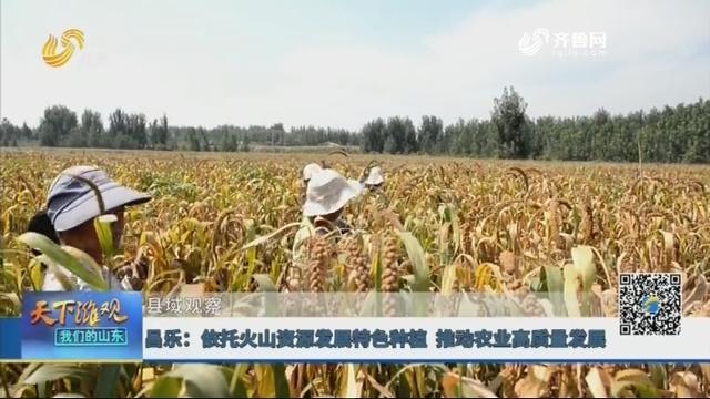 【县域观察】昌乐:依托火山资源发展特色种植 推动农业高质量发展