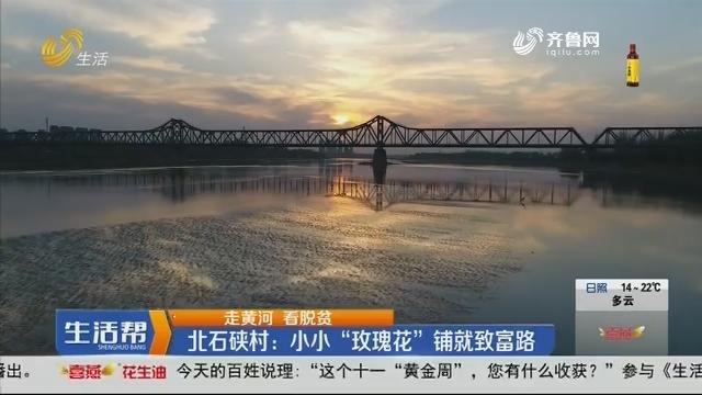 """【走黄河 看脱贫】北石硖村:小小""""玫瑰花""""铺就致富路"""