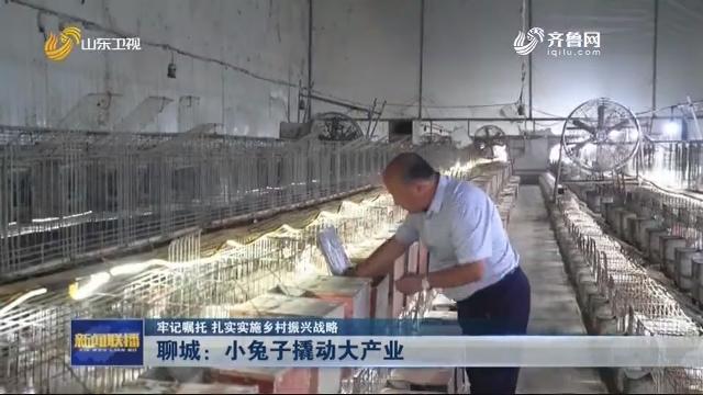 【牢记嘱托 扎实实施乡村振兴战略】聊城:小兔子撬动大产业