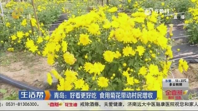 青岛:好看更好吃 食用菊花带动村民增收