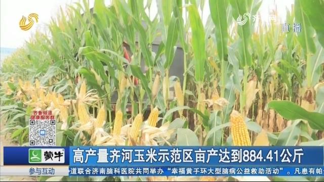 齐河玉米示范区亩产达到884.41公斤