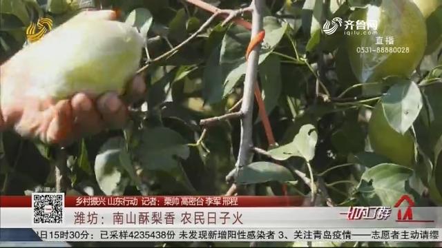 【乡村振兴 山东行动】潍坊:南山酥梨香 农民日子火