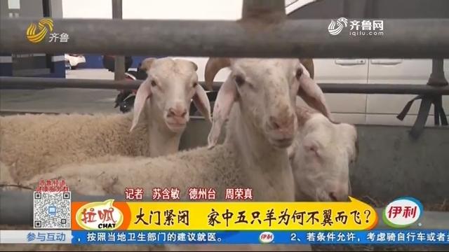 大门紧闭 家中五只羊为何不翼而飞?