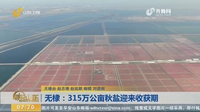 无棣:315万公亩秋盐迎来收获期