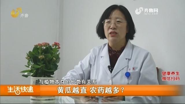 黄瓜越直 农药越多?