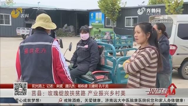 【阳光路上】莒县:玫瑰绽放扶贫路 产业振兴乡村美