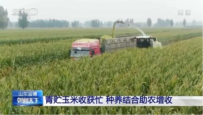 得益乳业青贮玉米收获忙,种养结合助农增收
