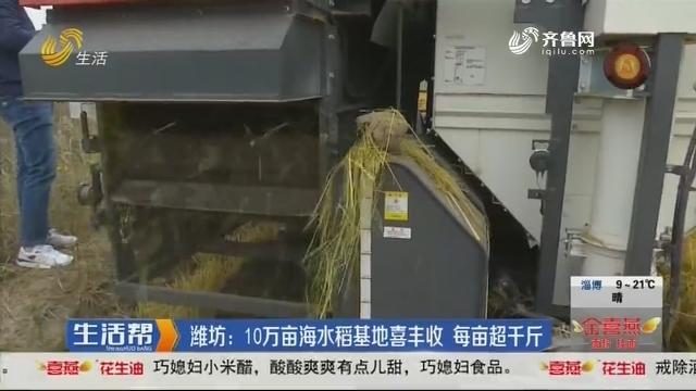 潍坊:10万亩海水稻基地喜丰收  每亩超千斤