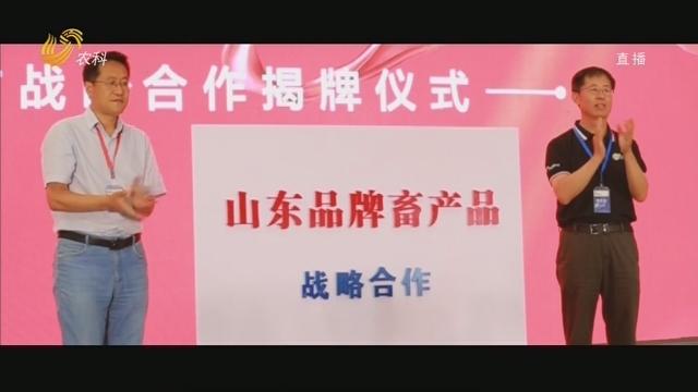 """""""齐鲁畜牧""""山东畜产品公用品牌2020宣传片"""