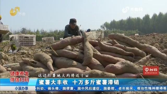 蜜薯大丰收 十万多斤蜜薯滞销
