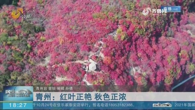 青州:红叶正艳 秋色正浓