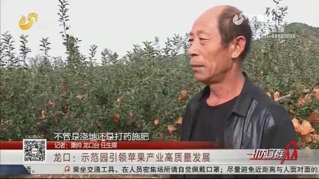 龙口:示范园引领苹果产业高质量发展