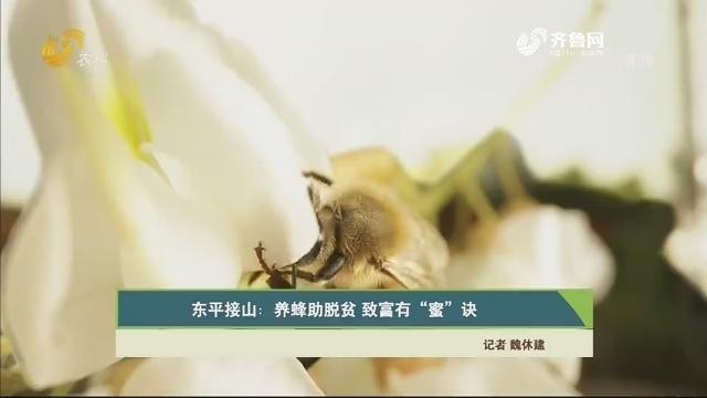 """【齐鲁畜牧】东平接山:养蜂助脱贫 致富有""""蜜""""诀"""